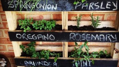 Photo of How to Create a Beautiful Outdoor Herb or Vegetable Garden