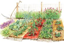 Photo of Growing a Vegetable Garden